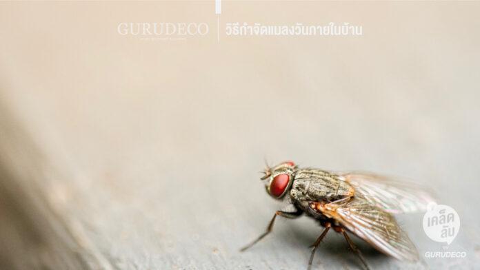 วิธีกำจัดแมลงวัน